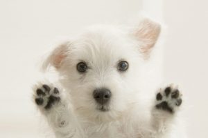 cute puppy wallpapers A7