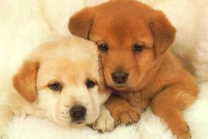 cute puppy wallpapers A8