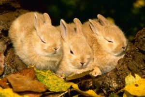 cute rabbit wallpapers