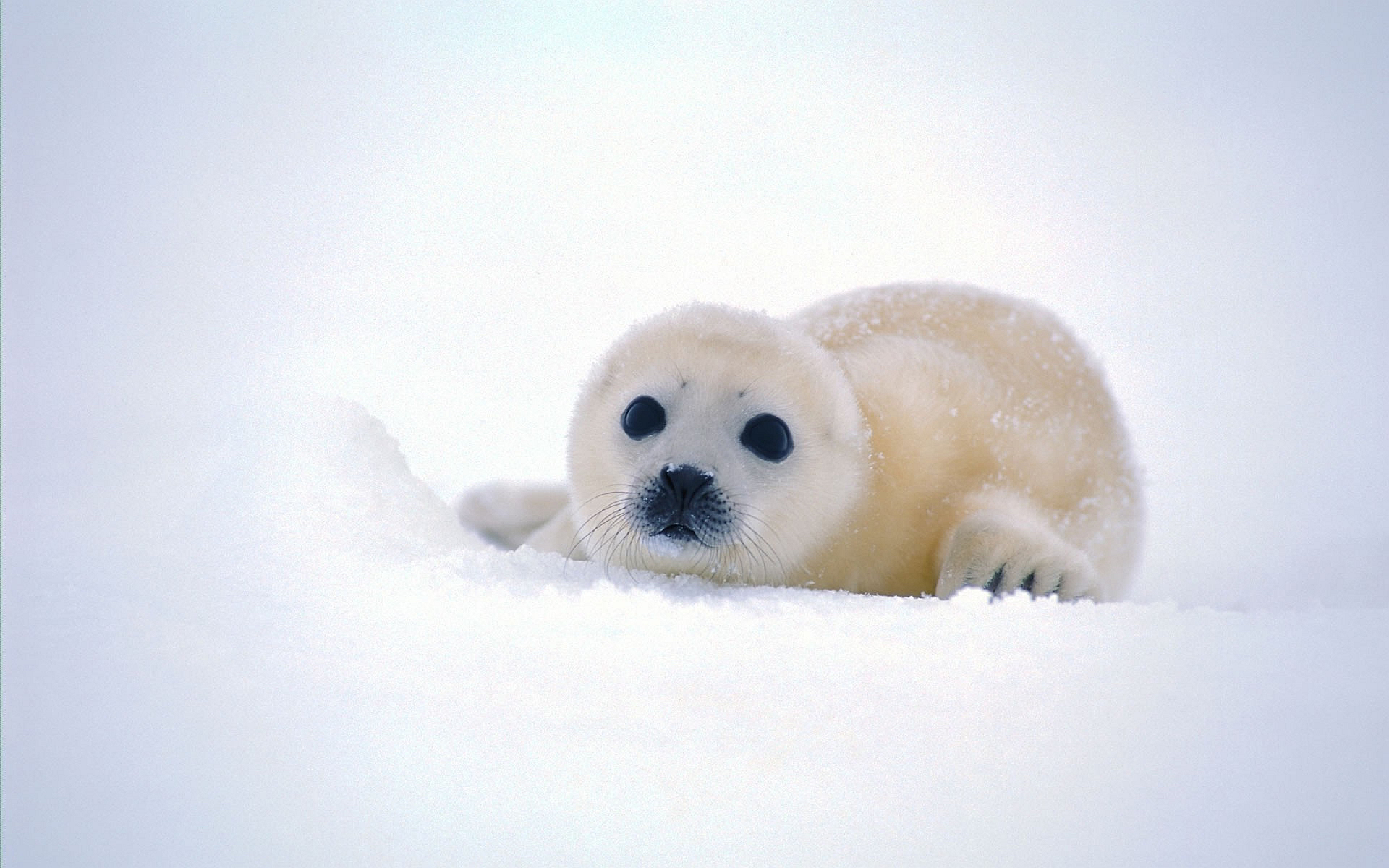 cute seal images