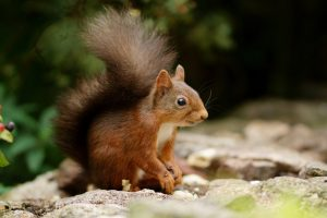 cute squirrel images