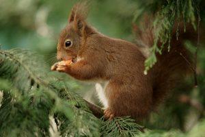 cute squirrel picture
