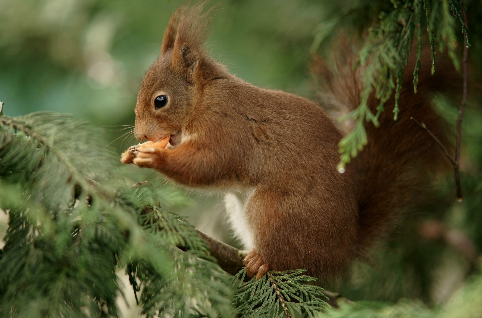 cute squirrel picture