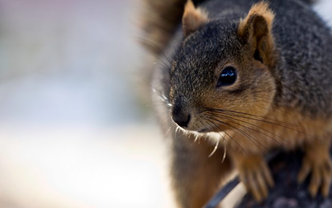 cute squirrel pictures