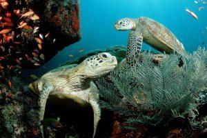 cute turtles wallpaper
