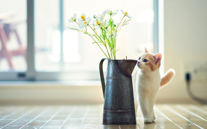 cute vase wallpaper