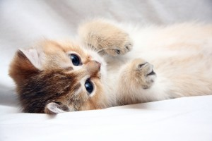cute wallpaper cat