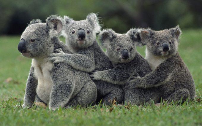 cute wildlife pictures