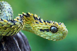 danger snake wallpaper