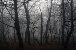 dark forest backgrounds