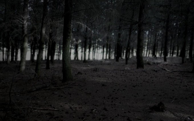 dark night forest wallpaper