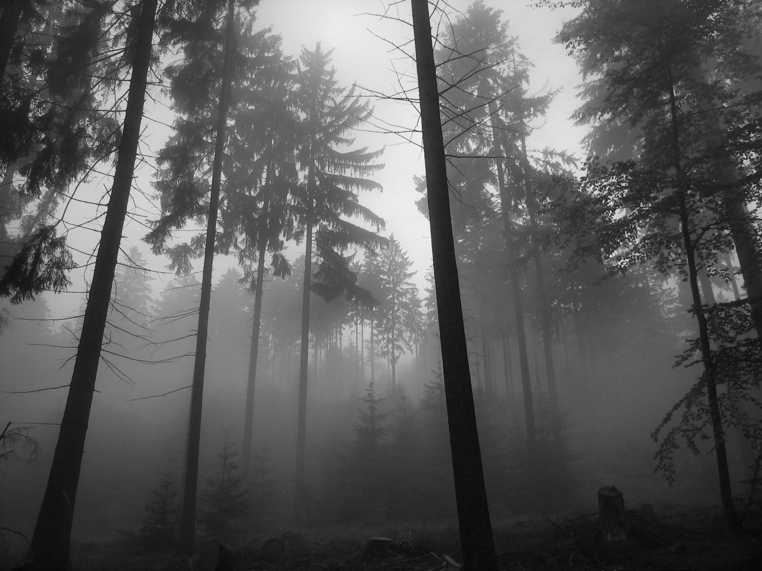 dark night forest wallpaper hd