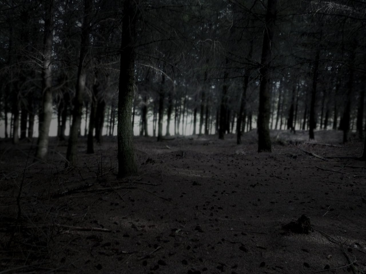 dark night forest wall...
