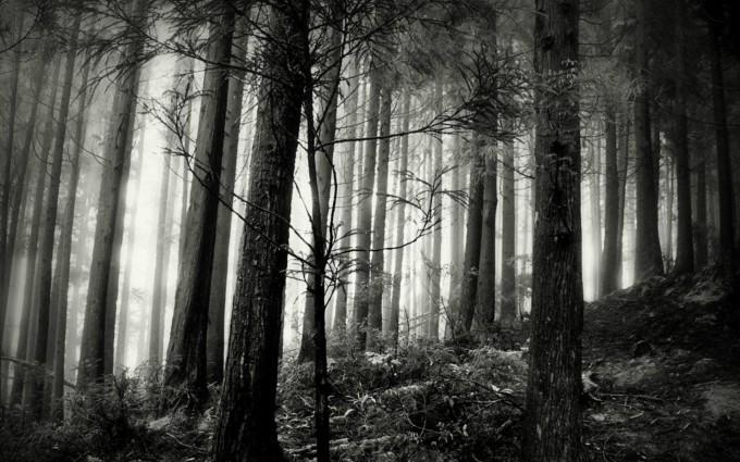 dark night forest wallpaper1