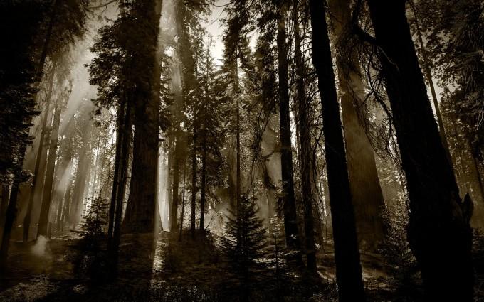 dark woods background