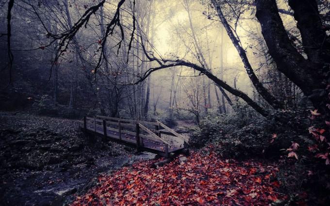 dark woods images