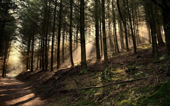 dark woods wallpaper