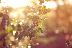 deep forest wallpaper fruits