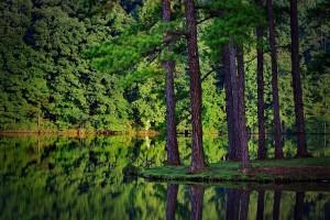 deep forest wallpaper green