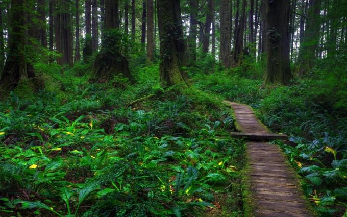 deep forest wallpaper hd