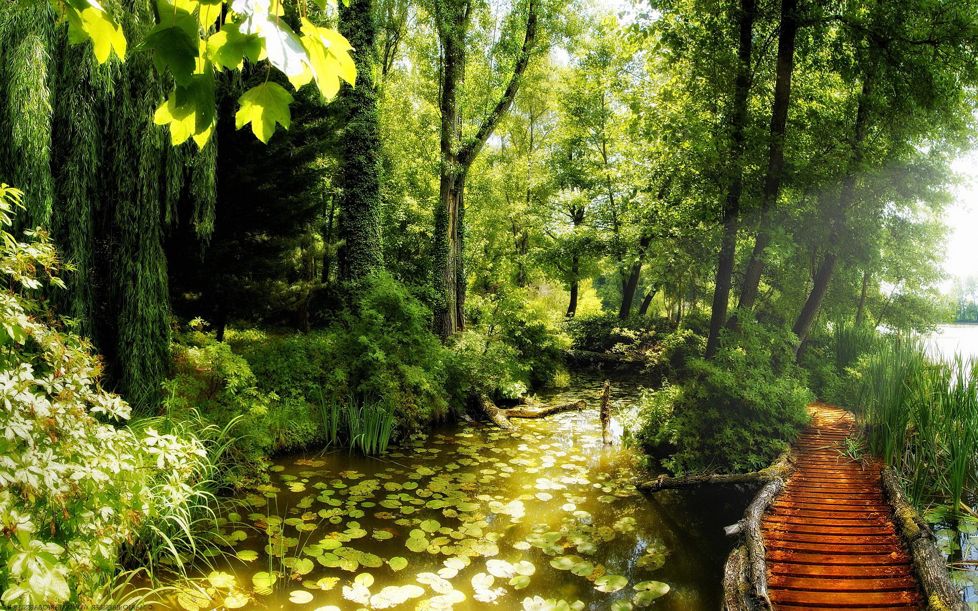 deep forest wallpaper path