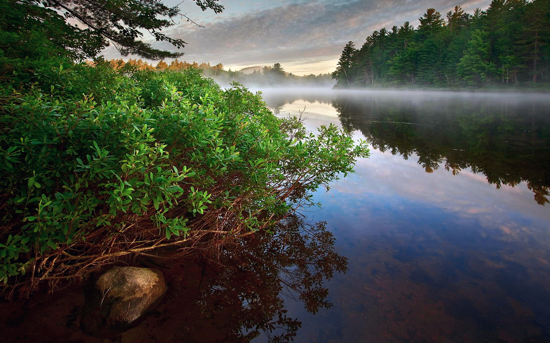 deep forest wallpaper river