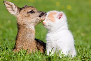 deer backgrounds