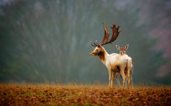 deer damask wallpaper