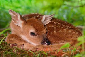 deer image hd