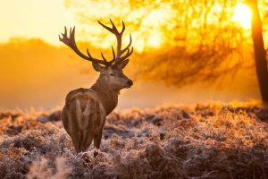deer photos free download