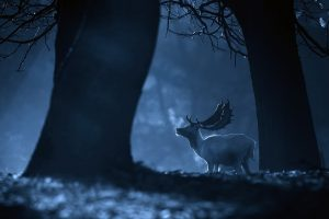 deer picture hd