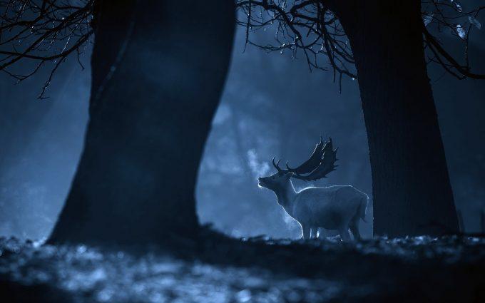 deer picture hd