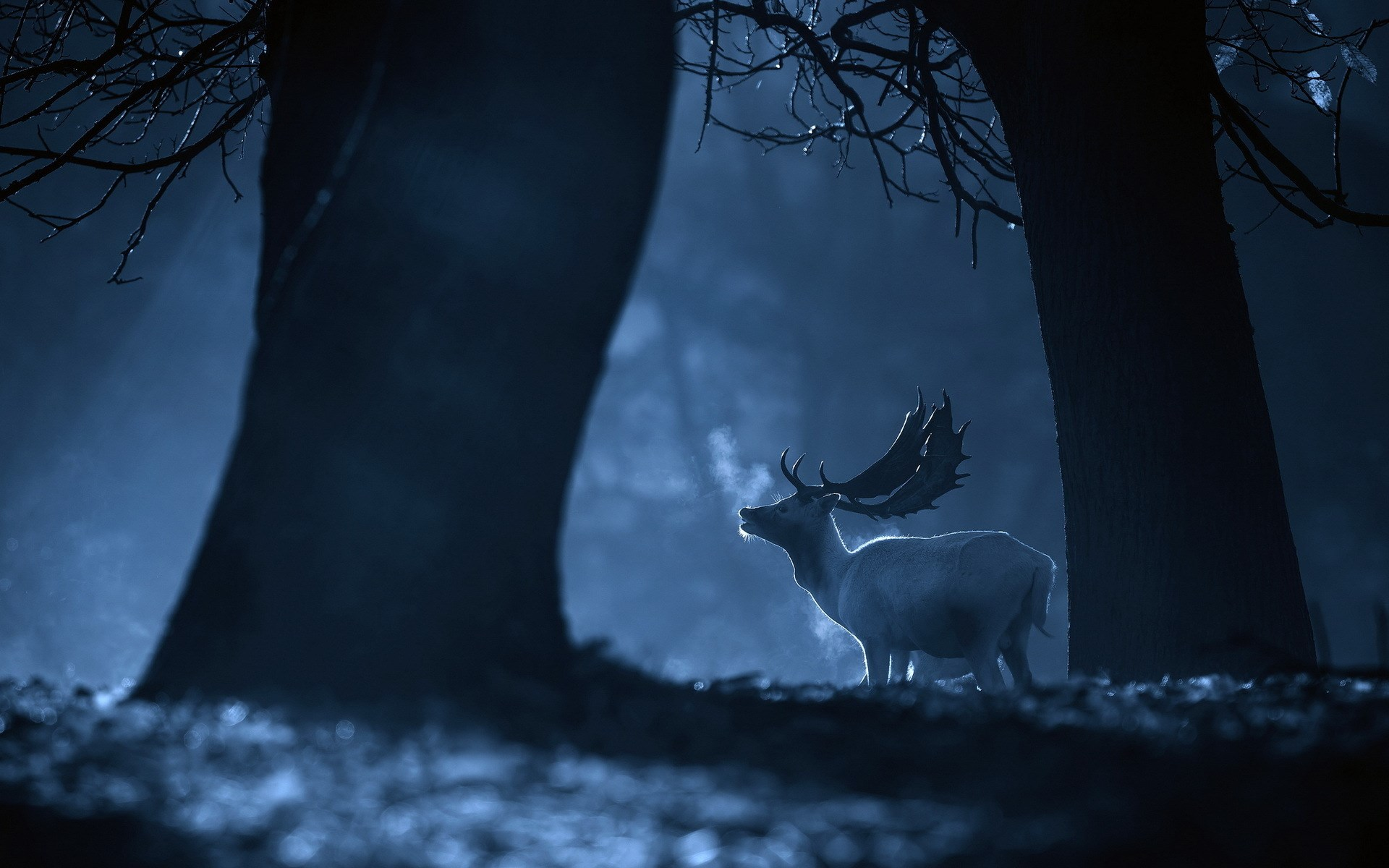 Deer Picture Hd - HD Desktop Wallpapers