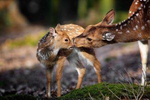 deer pictures free