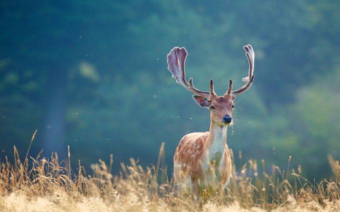 deer wall paper