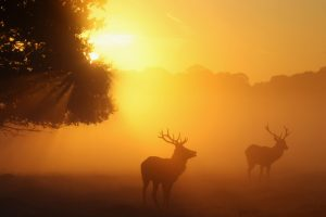 deer wallpaper free download
