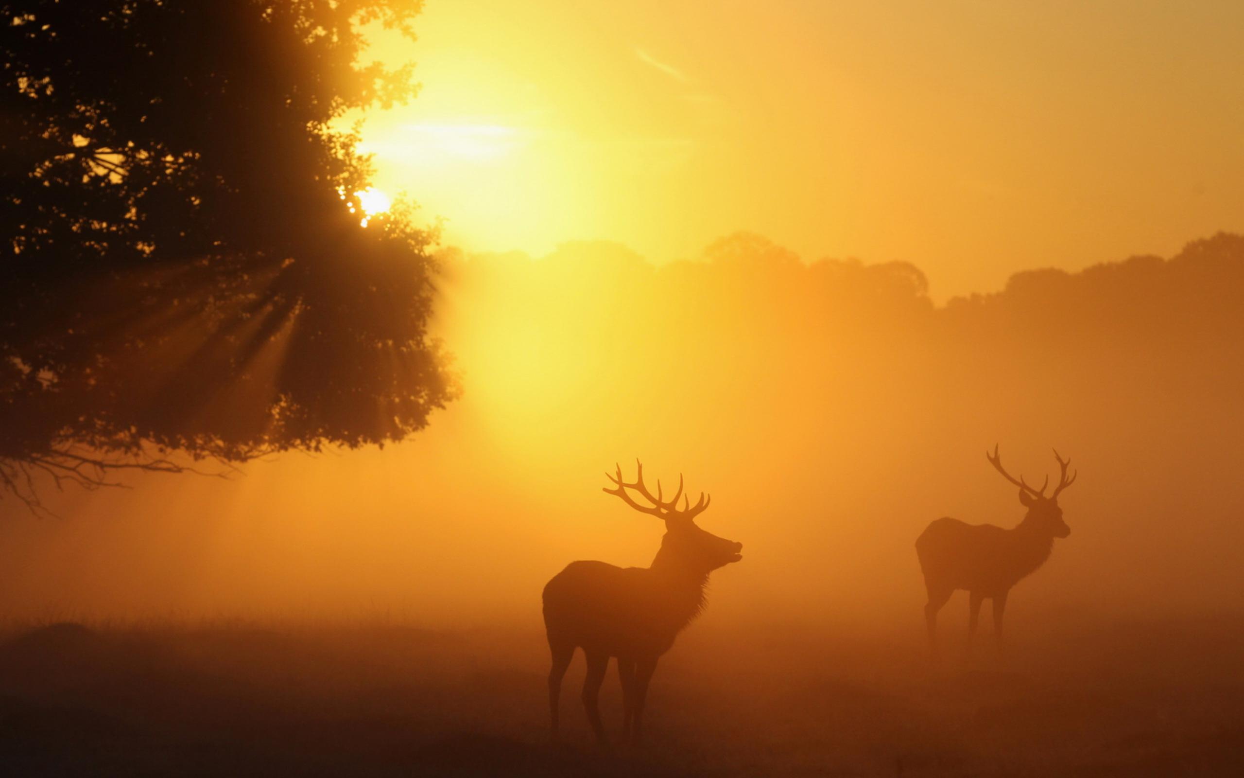 deer wallpaper free download