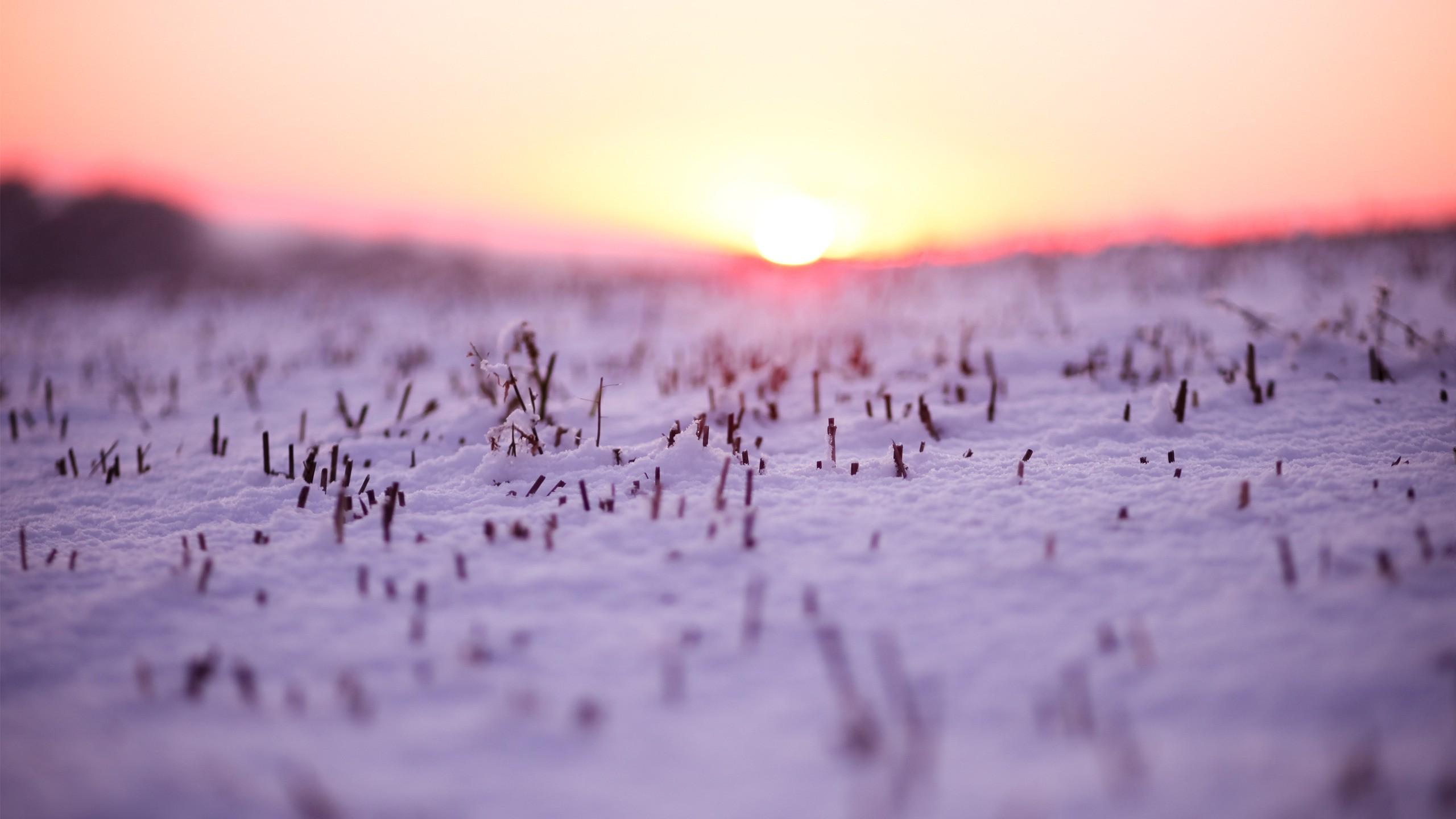 depth of field snow
