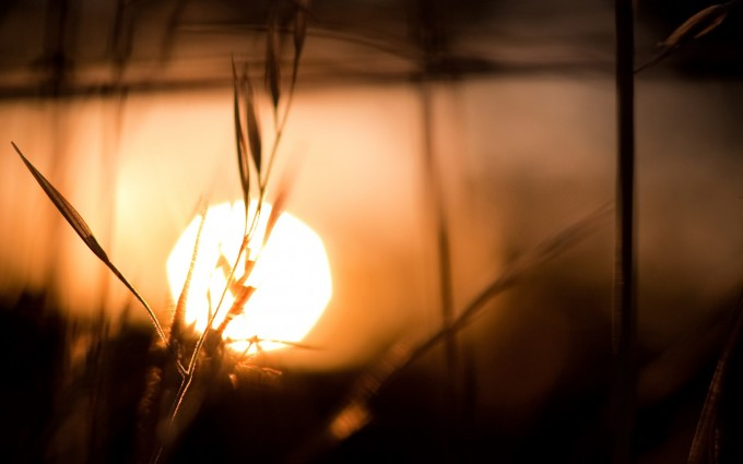 depth of field sun