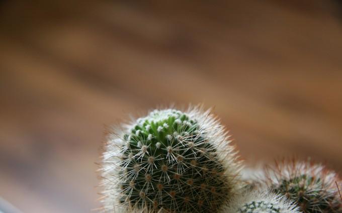 desert cactus images