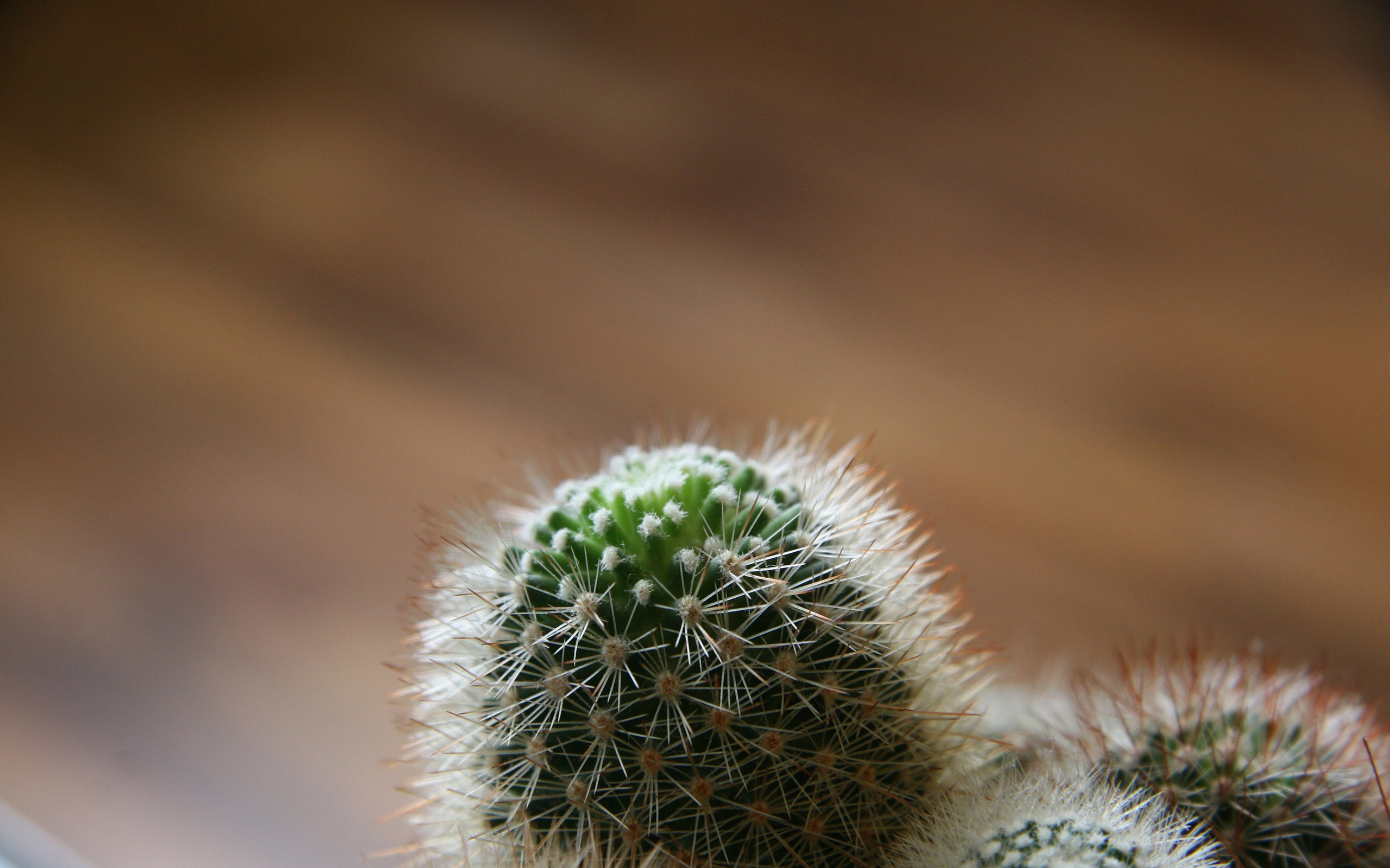 hd cactus wallpapers - photo #7