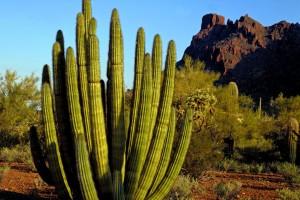 desert vegetation pictures