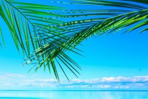 desktop background ocean