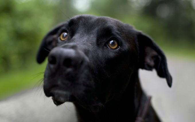 desktop dog