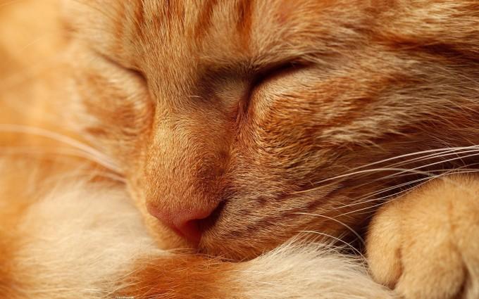desktop wallpaper cats