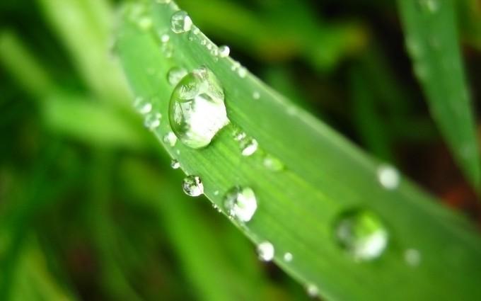 dew drops pictures