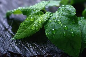 dew drops pictures leaf