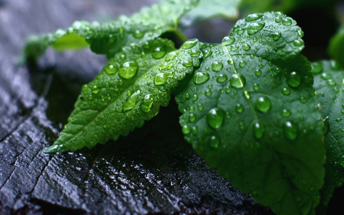 dew drops pictures leaf