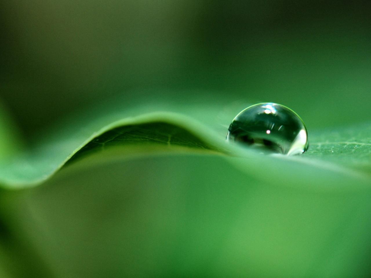 dew drops wallpaper leaf