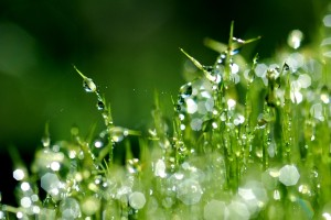dew drops wallpaper nature